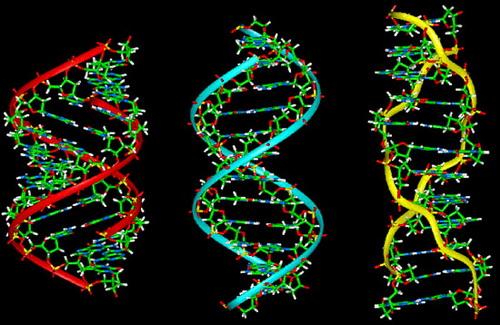 Nhung-dieu-can-biet-ve-viec-xet-nghiem-ADN-hien-nay-1